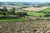行進 (イタリア): 夏の風景 — ストック写真