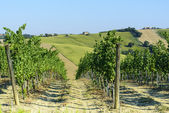 Marches (Italy): summer landscape — Stok fotoğraf