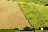 Marches (Italy): summer landscape — Stock Photo