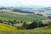 Marscher (Italien): sommar landskap — Stockfoto