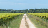 Country near Ravenna (Italy) — Stock Photo