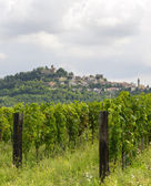 Summer landscape in Monferrato with vineyards — Stock Photo