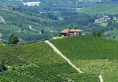 Summer landscape in Langhe (Italy) — Stock Photo