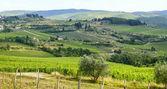 Chianti, Tuscany — Foto de Stock