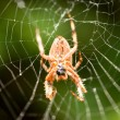 Spider — Stock Photo #52129199
