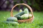 Salatalık — Stok fotoğraf
