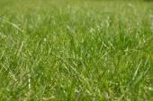 Lawn — Stock Photo