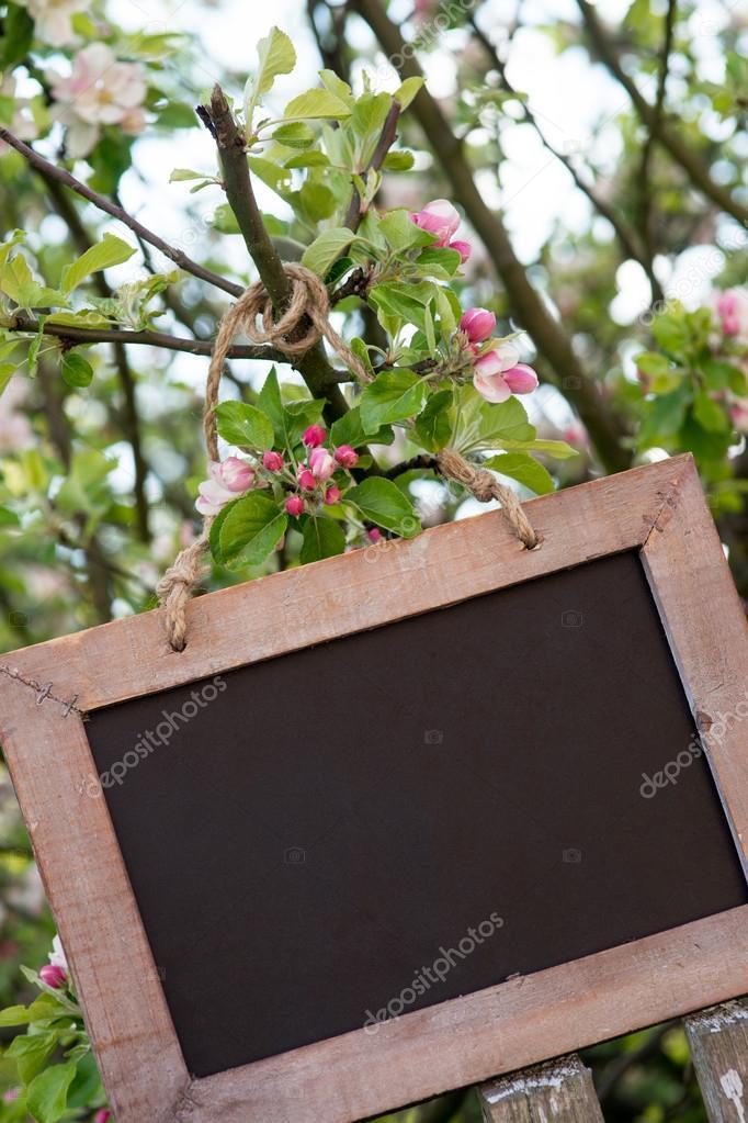 在春天里的一棵苹果树上的空盘子