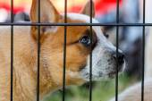 Puppy Dog behind bars  — Stock Photo