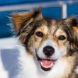 Happy dog on a boat in the summertime — Stock Photo #53344423