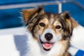 Happy dog on a boat in the summertime — Stock Photo