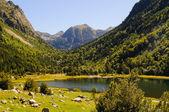 Llebreta lake — Stock Photo