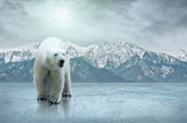 White polar bear on the ice — Stock Photo