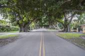 Giant Banyan Trees in Coral Gables, Florida, USA — Stock Photo