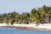 Beautiful white sand beach in Key West, Florida, USA — ストック写真