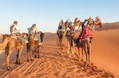 Camel caravan with tourists in the sahara desert. Morocco, Africa — Stock Photo