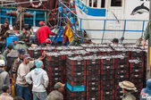 Fishermen unloading catch in the port of Essaouira, Morocco — Stock fotografie