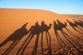 Caravan with tourists in the sahara desert. Morocco, Africa — Stock Photo