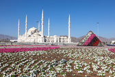 Den nya Sheikh Zayed Grand Mosque i Fujairah, Förenade Arabemiraten — Stockfoto