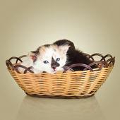 Two little kittens. Cat sitting in basket — Stock Photo