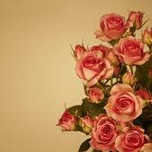 Rose Flowers — Stock Photo