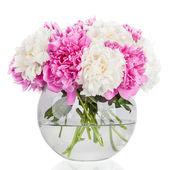 Fondo de pétalos de flor de peonía. Paeonia lactiflora. — Foto de Stock