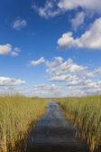 Waterway through the Florida Everglades — Stok fotoğraf