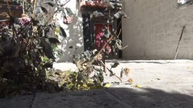 Track video shot of a generic Tibetan garden and compound — Stock Video