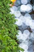 Tree closeup. Background lights bokeh. — Stock Photo