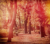Autumn in the park in late afternoon — Stock Photo
