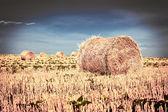 Balle di paglia dopo il raccolto nel campo — Foto Stock