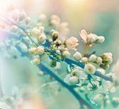 Soft focus on flowering branch - Blooming fruit tree — Foto de Stock