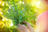 Fresh herbs - spices in woman's hands — 图库照片