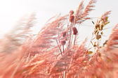 Dry thistle in meadow — Stock Photo