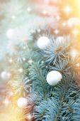 Palla di neve sull'albero di natale — Foto Stock