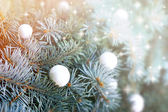 Christmas decoration - christmas ball on Christmas tree — 图库照片