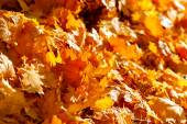 Autumn fallen leaves lit by the afternoon sun — Stock Photo