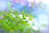 Young spring leaves after rain — Stock Photo
