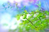 Genç bahar yaprakları yağmur sonra — Stok fotoğraf