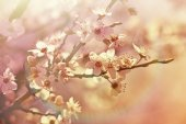 Beautiful tree flowering — Stockfoto