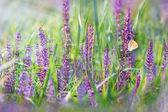 Meadow flowers - purple flowers — Stock fotografie