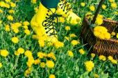 Legs in medow full off dandeloin flowers — Stock Photo