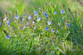 Spring in meadow — Stock Photo