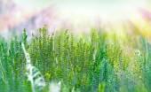 Green flower — Stock Photo