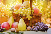 Fresh seasonal organic fruits — Stock Photo