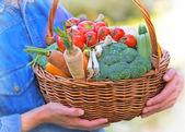 Woman holds basket full of organic vegetables — Stock Photo