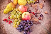 Autumn fruits - Autumn harvest — Stock Photo