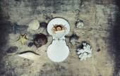 Sea shells on old wooden background — Stock fotografie