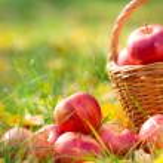 Autumn fruits — Stock Photo #53641255