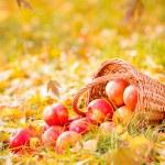 Autumn fruits — Stock Photo #53641307